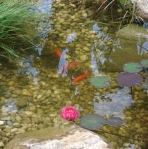 Wassergarten in Gröbenzell